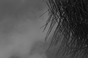 black-and-white-image-of-clouds-refelcted-on-water-along-with-sedge