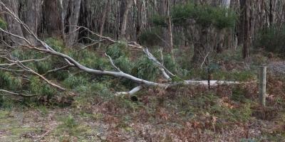 fallen-branch-on-wire-fence-in-bushland