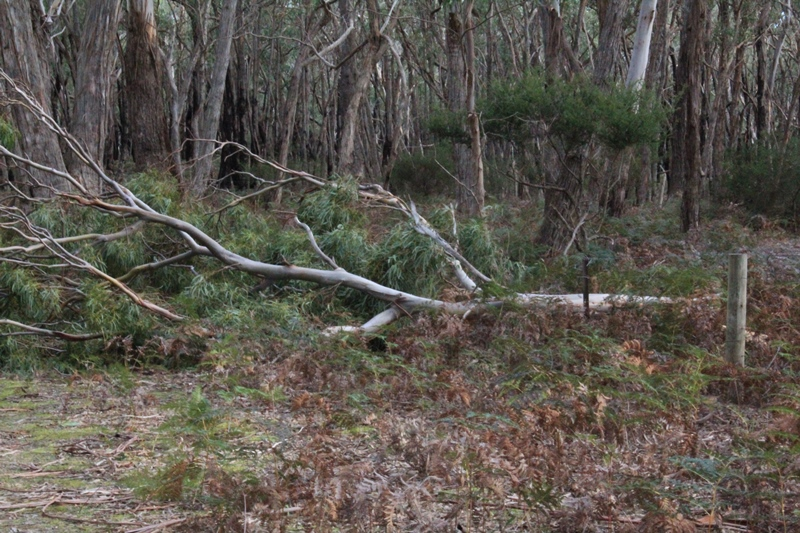fallen-branch-on-wire-fence-in-bushland