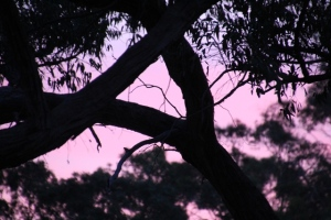 pink-and-purple-sky-on-sunset-through-tree-silhouette